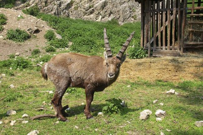 Zoos und Tierparks, Ausflugsziel in Salzburg